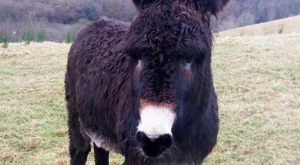 The donkey that was abandoned and will now be taken in by a sanctuary following a judge's intervention