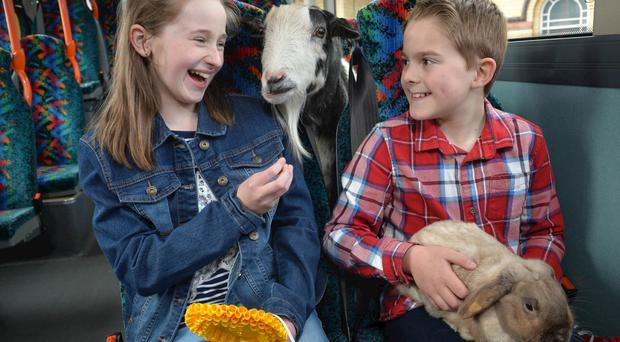 Sam Geary and Judith Duncan join a couple of four-legged friends at the launch of Translink's special bus, coach and train transport plans for this year's Balmoral Show