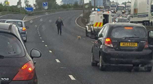 Traffic comes to a halt as Molly is rescued by police officers
