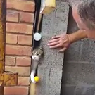 Relieved cat Francee squeezes herself out through the gap Campbell made in the wall of his new-build home