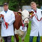 Robert Murdock and son Marcus with their champion and reserve champion herefords at the Newry Show