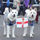 Akitas Angel and Ghost will be flying the flag today