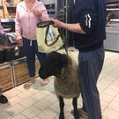A shopper encounters the man and his sheep in Lidl