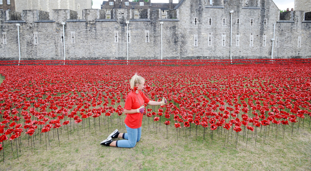 A volunteer helping to construct the original ceramic poppies art installation Blood Swept Lands And Seas Of Red at the Tower of London in 2014
