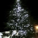 The Christmas tree lights up the Stewartstown Road