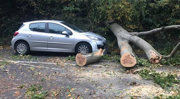 Kelly Murray's car after being hit by a tree on the Malone Road in Belfast yesterday