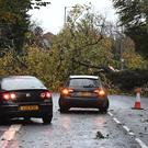 A fallen tree blocks a road in Belfast.