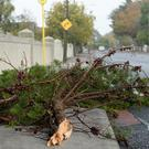 A fallen tree branch on a road in Dublin