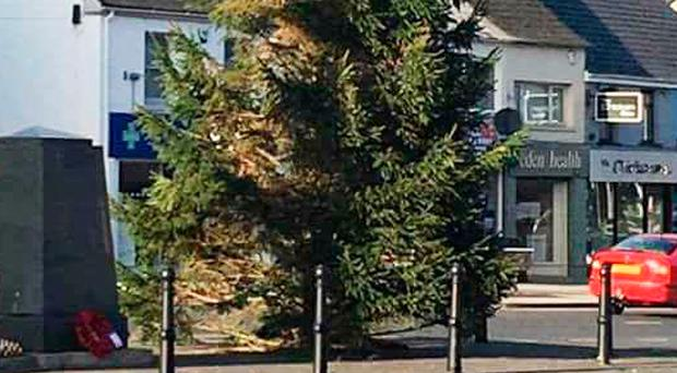 Banbridge's tree