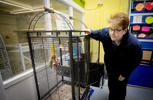 Marion McAuley of Ladysmith Pet Shop after thieves stole Barney the parrot