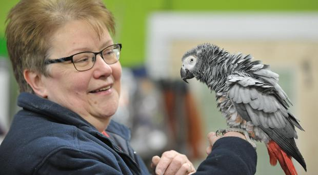 Marion McAuley has been reunited with her African Grey parrot Barney