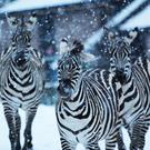 The big freeze causes zoo CLOSURE!