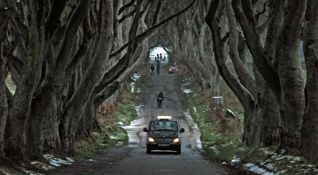 A taxi drives through the Dark Hedges despite vehicles being banned from the road