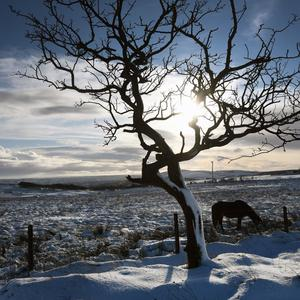 Horses on the Divis Mountain on Monday, as cold weather continues across parts of Northern Ireland , leaving difficult driving conditions for motorists and some schools being closed.