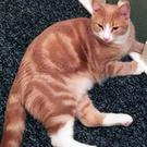 The disappearance of Spencer the cat has left his owners Michael McGrath and Marta Larkin distraught