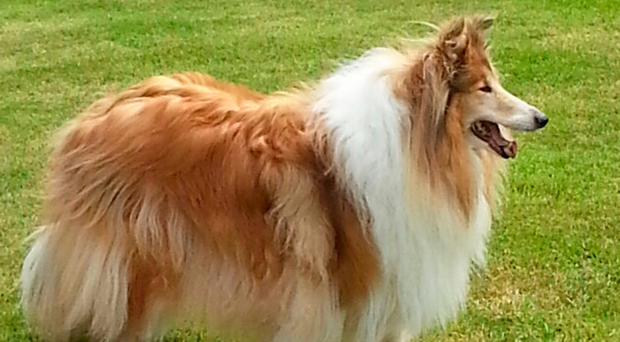Honey has been missing from her Newtownhamilton home since last month
