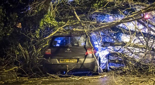 A car struck by a falling tree at Rathcoole Drive
