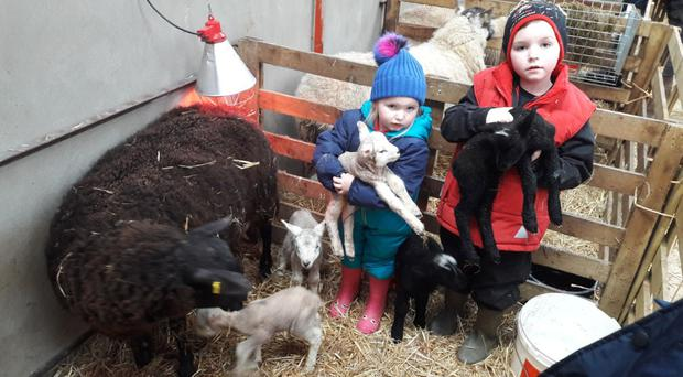 Little Sam (6) and Nicole (3) Kerr with the ewe and her newborns