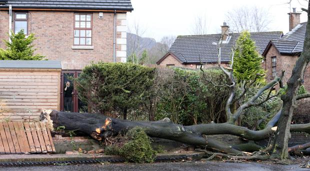A woman looks out of her window at a tree that has fallen on her property at Ardmillan, Fortwilliam, as Storm Eleanor gusted up to 100mph around the UK and Ireland