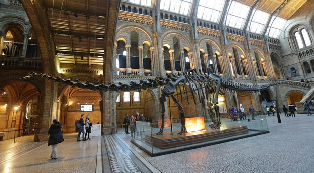 The replica model of Dippy the Diplodocus on display in Hintze Hall at the Natural History Museum (Yui Mok/PA)
