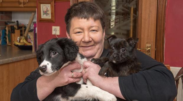 Violet Dennehy has fostered a wide range of animals over the years including caring for rescued pups Oscar (left) and Flora