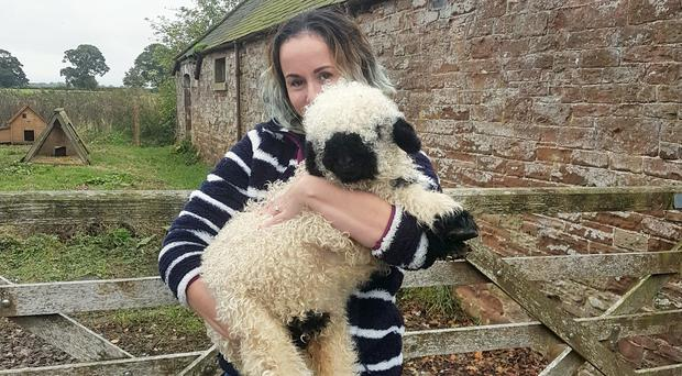 Marley the sheep with Ali Vaughan