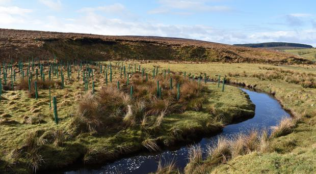 Thousands of native trees are currently taking root along the banks of the Burntollet river in the Faughan Valley