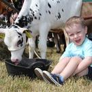 Enjoying Armagh Show are Sam Berry (3) with this Holstein calf