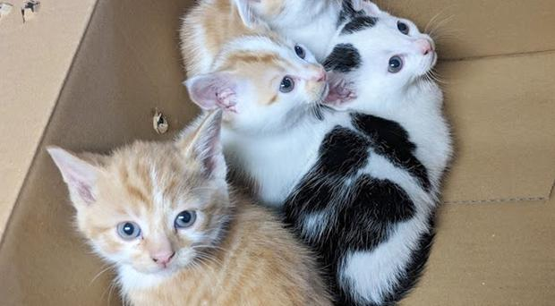 The four kittens were taken in by Pet Connection in Newry