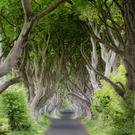 The Dark Hedges have been a huge draw for visitors from around the world.