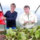 Simon McReynolds from Newtownards and Andrew Johnston from Bangor, at work in the garden