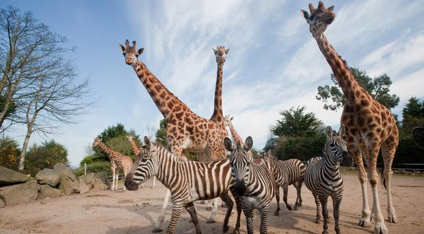 A sensory experience aimed at children with autism launches at Belfast Zoo this weekend (Belfast Zoo/PA)