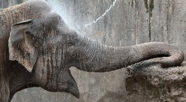 Dhunja the elephant gets a cooling down at Belfast Zoo