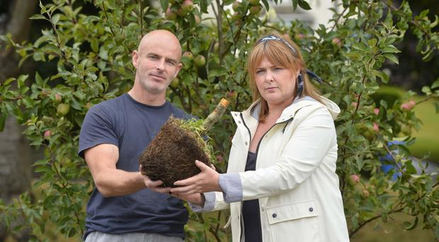 Stephen McGivern and Julie-Ann Burns hold the stump of the apple tree