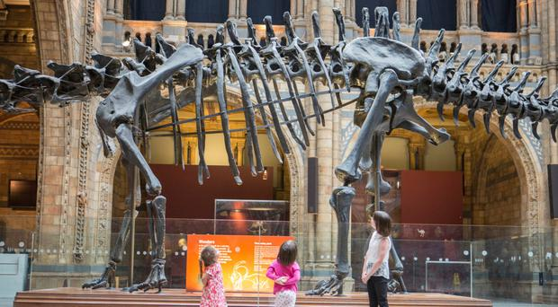 Dippy the Diplodocus will take up residence in the Ulster Museum from next month as part of a road trip around the UK