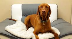 Dogs relax and watch TV in the Alpha 1 Dog Hotel in Coleraine