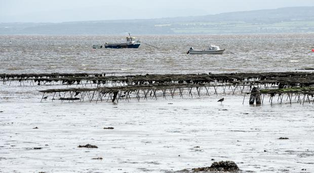 Oyster trestles at Quigley's Point in Lough Foyle