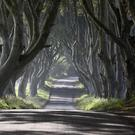 The Dark Hedges (Michael Cooper/Woodland Trust/PA)
