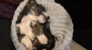 The tiny puppy estimated to be just four weeks old who died in south Armagh