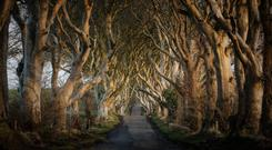 The Dark Hedges in north Antrim (Northern Ireland Tourist Board/PA)