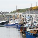 A £36m redevelopment plan for Kilkeel harbour has been proposed
