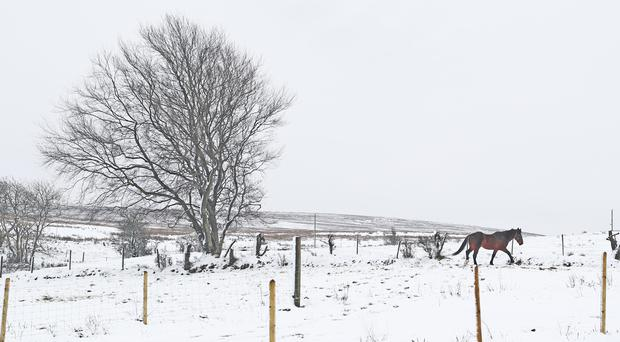 A horse in a snowy field in the Divis Mountain area of Belfast, after temperatures plummeted to below freezing (Niall Carson/PA)