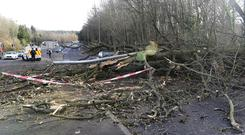 The Milltown Road in Belfast was blocked after a tree fell on a car