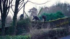 Chimps escape from their enclosure at Belfast Zoo