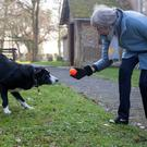 Theresa May with collie called Blitz as she leaves a church service yesterday