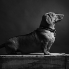 One of the prize-winning dog portraits