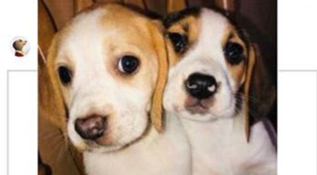 Puppies offered for sale online from Coalisland in Co Tyrone