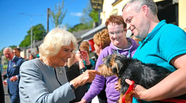 Duchess of Cornwall pets a dog during visit to Lisnaskea