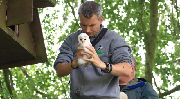 Conor McKinney, from Ulster Wildlife, checks on the barn owl chicks (Ulster Wildlife/PA)