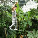Mustafa Danger crosses the high wire in the roof of the tropical ravine in Botanic Gardens yesterday